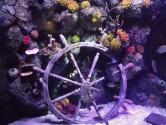 replica-ships-wheel-coral