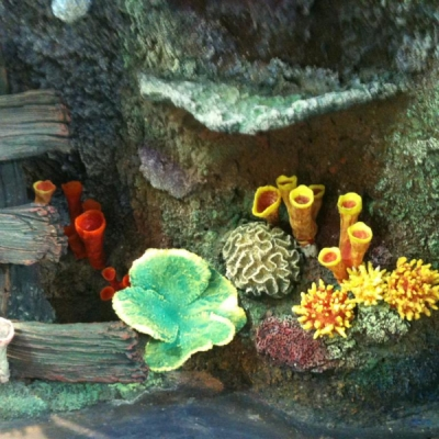 Just some of our huge range of corals