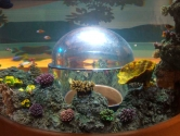 Coral decor and hemisphere view