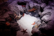 Star fish habitat