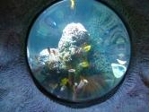 Convex dome view