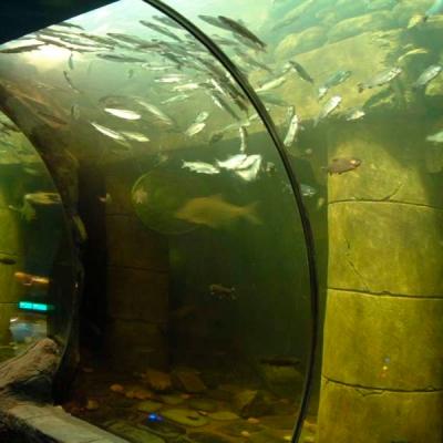 Fresh water aquarium deep loch view