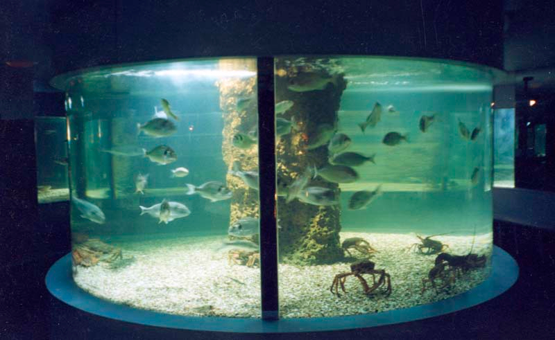 Custom made large aquariums commercial aquariums and for Large fish tank