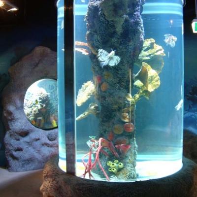Marine cylinder display