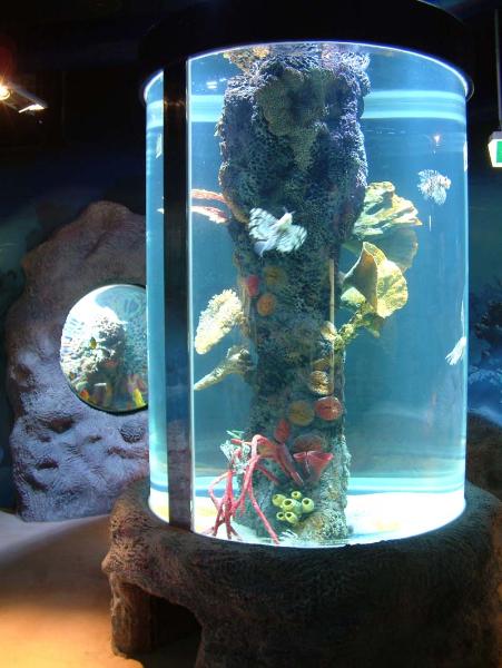 Custom made large aquariums commercial aquariums and for Column fish tank