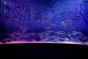 Marine shoal fish display