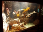 Marine display with kelp theme