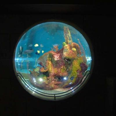 Ocean reef hemisphere view