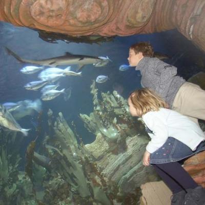 Ocean tank view