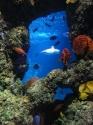 Ocean reef view
