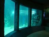 Mullioned ocean window view