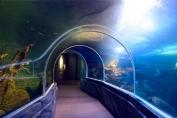 Tall ocean tunnel
