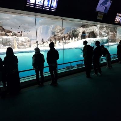 Acrylic viewing penguin exhibit