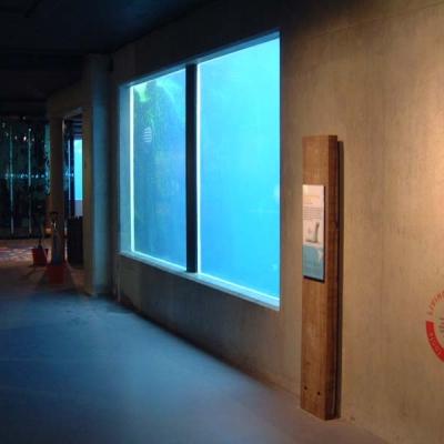 Acrylic penguin pool glazing