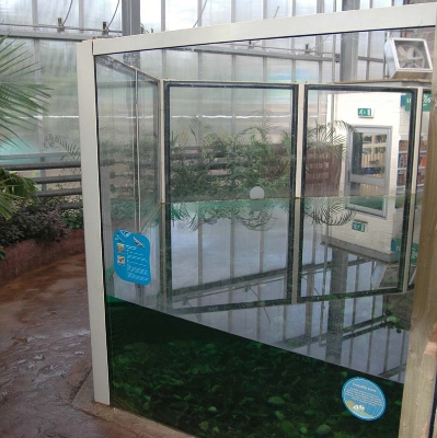 Crocodile swamp security glazing
