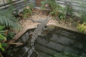 Crocodile swamp display