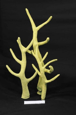 Staghorn Artificial Coral