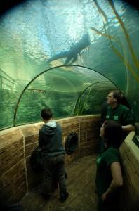 Walk through tunnel Bristol Zoo