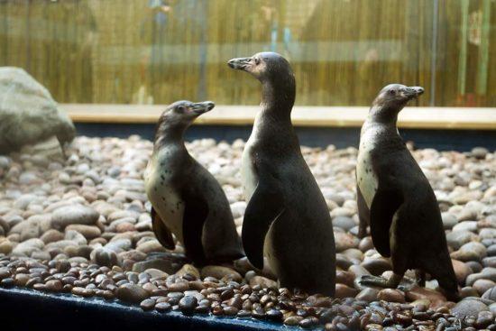 ATL penguin viewing