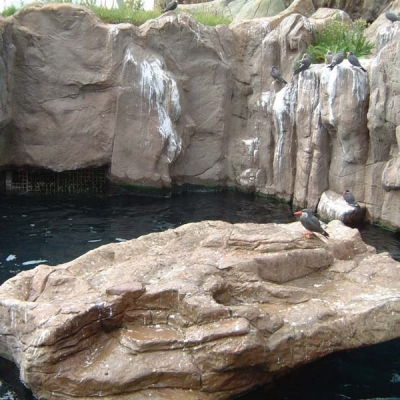 Captive Inca tern display