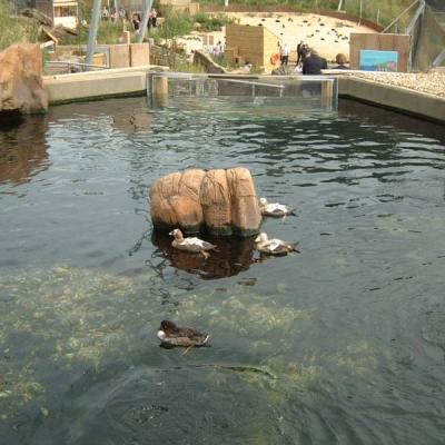 Sea duck display