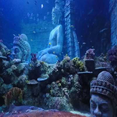 Submerged temple and corals