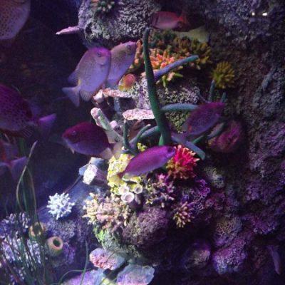 coral-reef-detail
