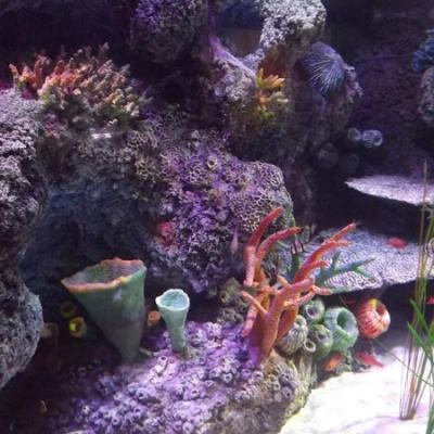 coral-reef-detail-2