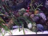 coral-reef-detail-3