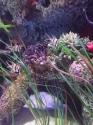 coral-reef-detail-4