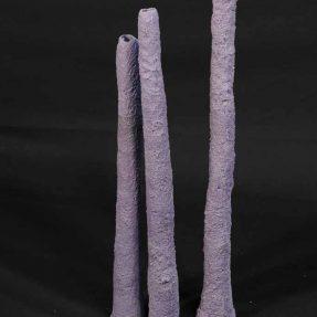 Pipe Corals