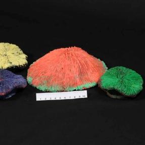 ATL Corals