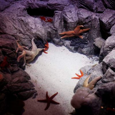 Star fish habitat