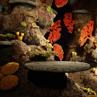 Coral cove detail