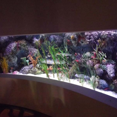 coral-reef-display