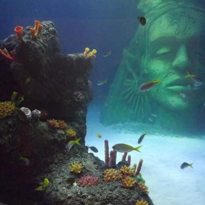 ocean-display-coral