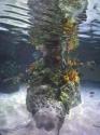 coral-pinnacle