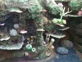 Coral detail decor