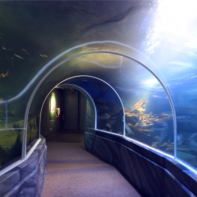 Drop sided tunnel in Sea Life Berlin