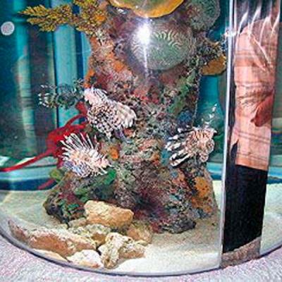 Coral cylinder