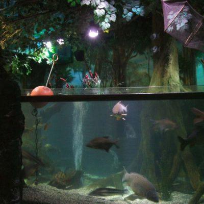Carp lake display