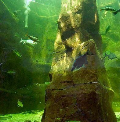 Deep lake display