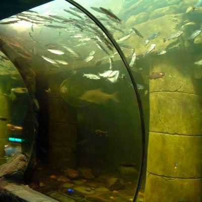 Fresh water aquarium deep loch view