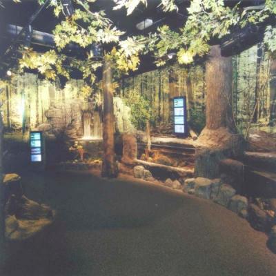 Forest stream display