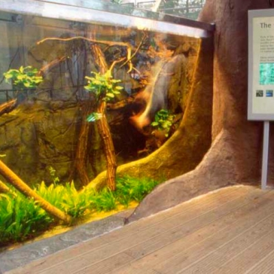 Rain forest display