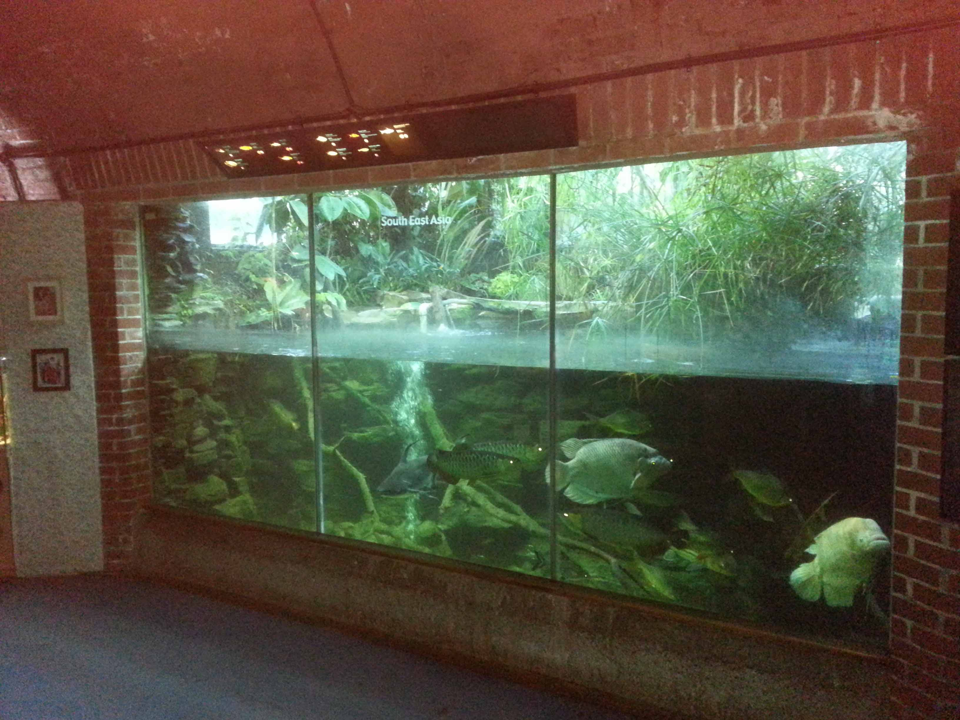 Viewing panels large aquariums swimming pool pond for Pond aquarium