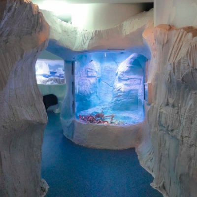 Ice habitat marine display