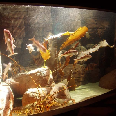 Marine display with kelp theme