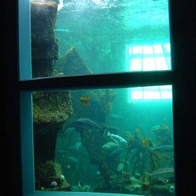 Deep ocean glazed view