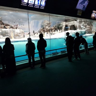 Acrylic viewing penguin exhibit